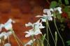 09_spring_037