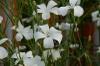 09_spring_044