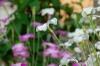 09_spring_052