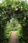 Swhite_garden_2