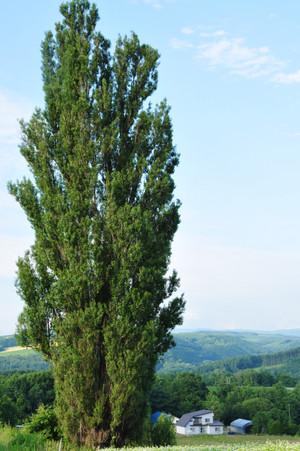 Panorama_05