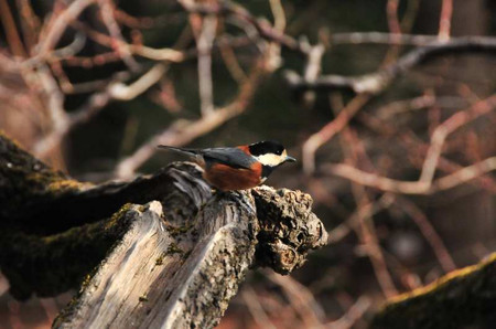 Birds_03