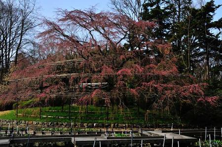 Kyoto_01_01