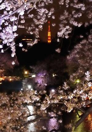 Sakura30_004