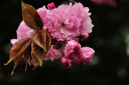 Sakura0504_01