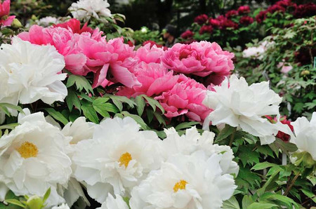 Flowers_03