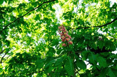 Spring_40
