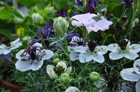Garden0525_01
