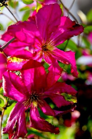 Garden0525_02_2