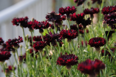 Garden0525_03