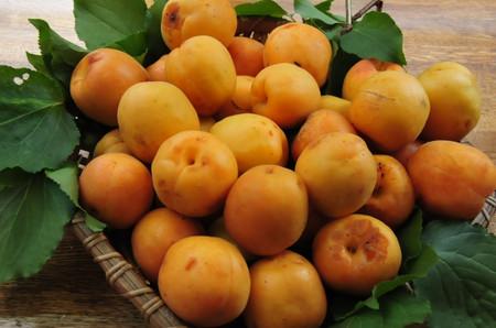 Apricot_01