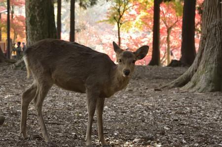 Deer_02