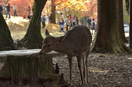 Deer_04