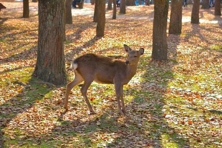 Deer_06