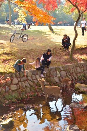 Deer_07