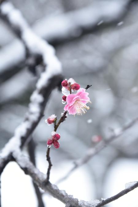 Snowpark_01