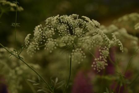 Rosegarden_04
