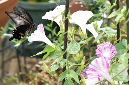 1807butterflies_05