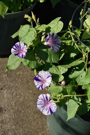 Fleurs_02_2