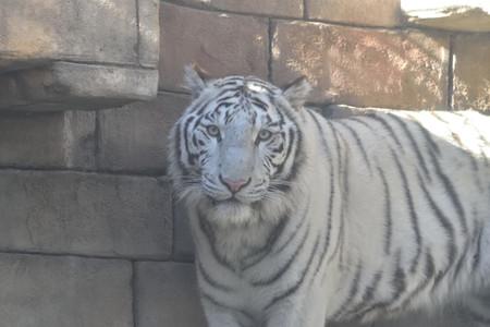 Zoo_06