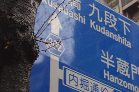Kudan_sakura_01