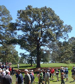 300pxeisenhower_tree_2011_cropped_2