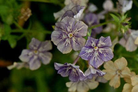 Cremebrule_02