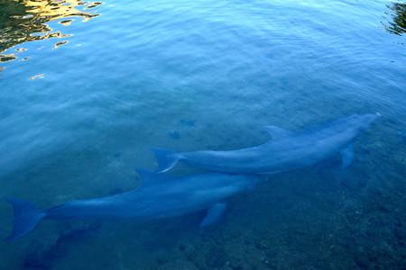 Dolphin_02