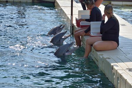 Dolphin_08