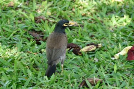 0730_bird02