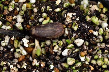 Seed_2