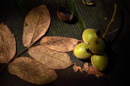 Frutas_02_2