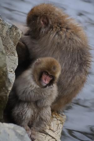Monkey_04