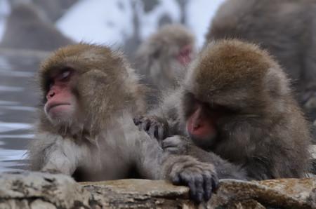 Monkey_07_2