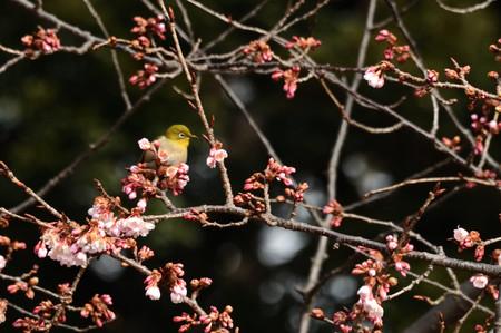 Birdwatchin_004