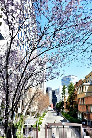 Sakura_1_01