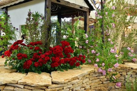 Roses_12