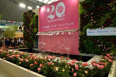 Roses_13