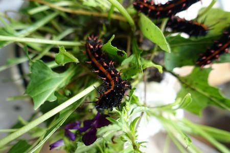 Butterfly_3_2