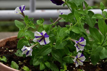 Roofgarden_1