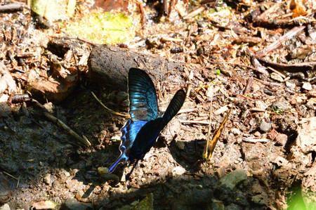Butterfly_1_01_2