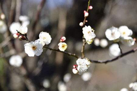 Odawara_03