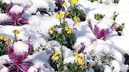 Snow_1_2
