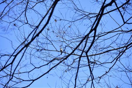 Birdwatching_05