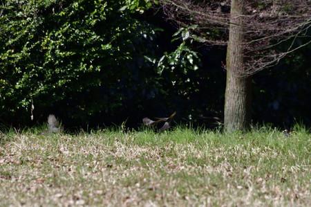 Birdwatching_07