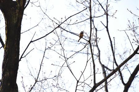 Birdwatching_11