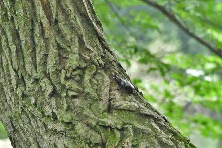 Birdwatching_08