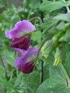 Sroof_garden_005