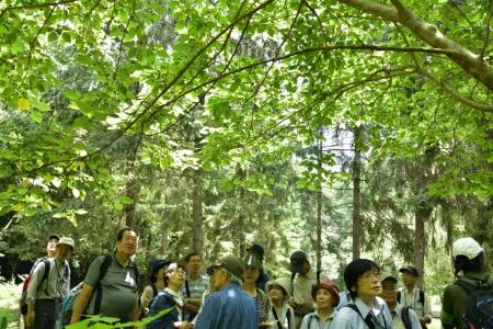 Tree_07