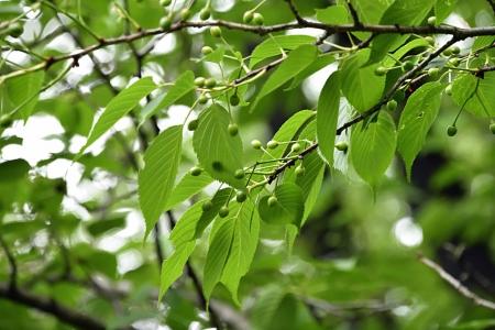 Trees_04